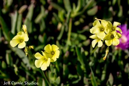 flower1 (1 of 1)