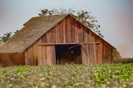 barn2 (1 of 1)_picc